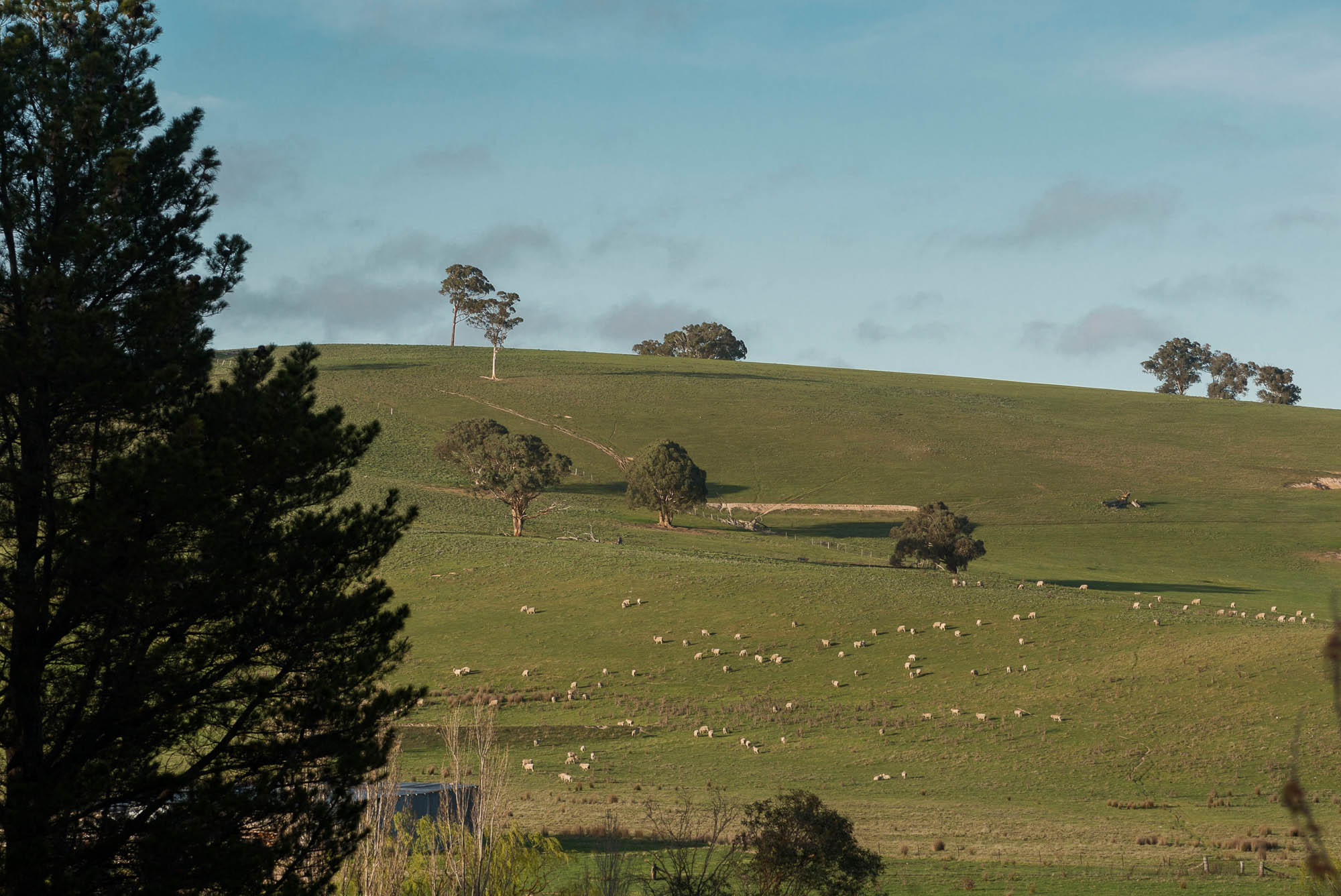 Binda pastureland bathed in morning light seen from  Hillcrest House. Photo: David Hill, Deep Hill Media.